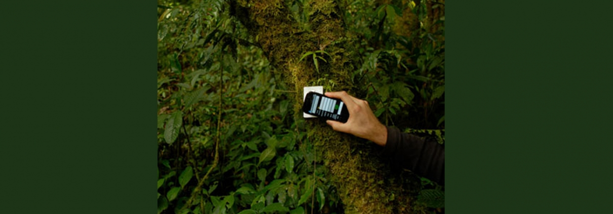nfc tags on trees in rainforest for tracking